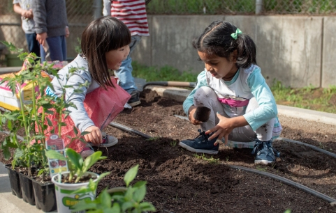 GardeningWednesday-3-crop